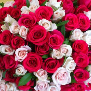 roses-2-875x584