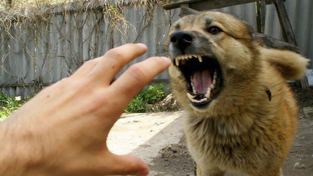 Делать ли прививку, если укусила собака